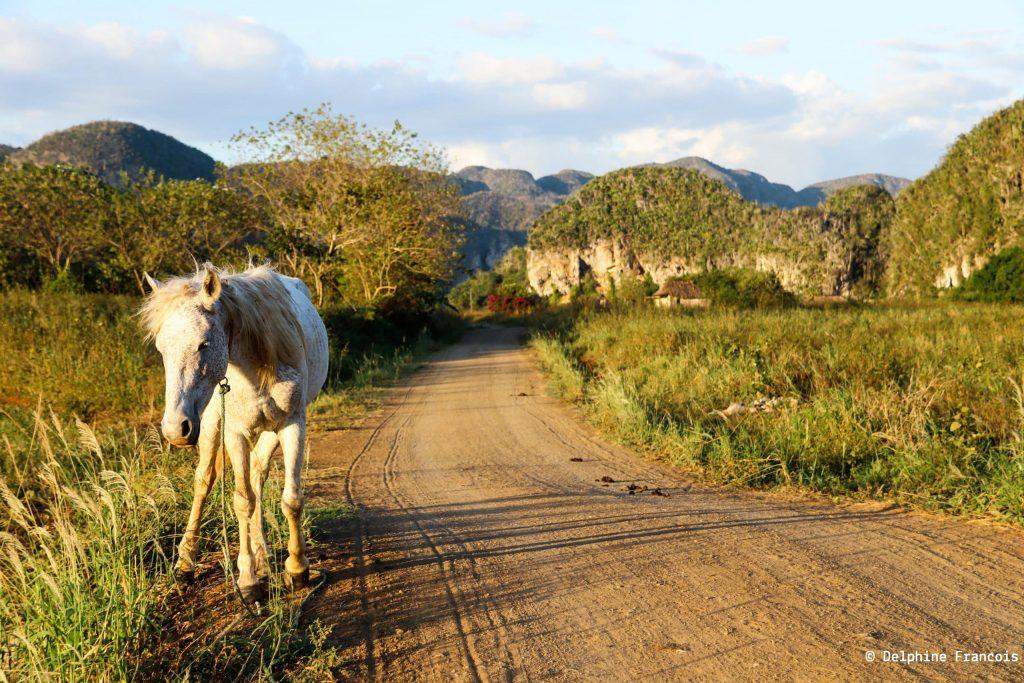 Cheval sur le bord d'une route de terre dans la campagne