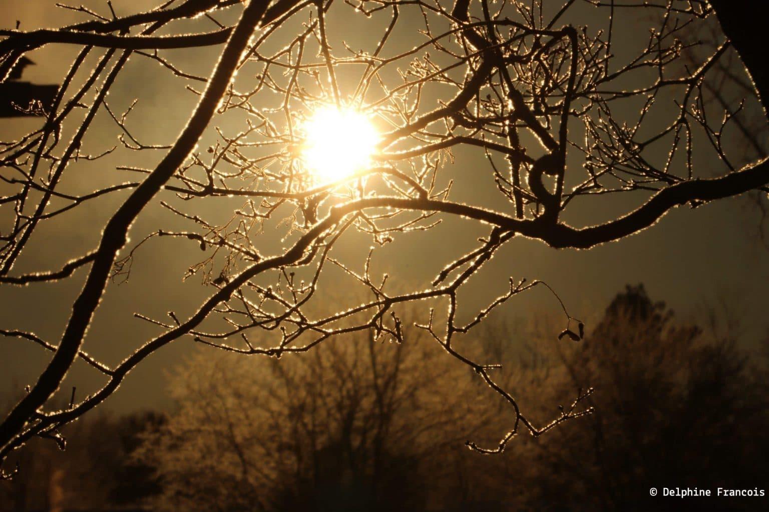 soleil à travers les branches givrées d'un arbre