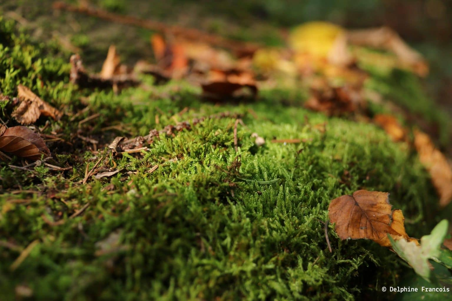 Mousse verte avec feuilles d'automne