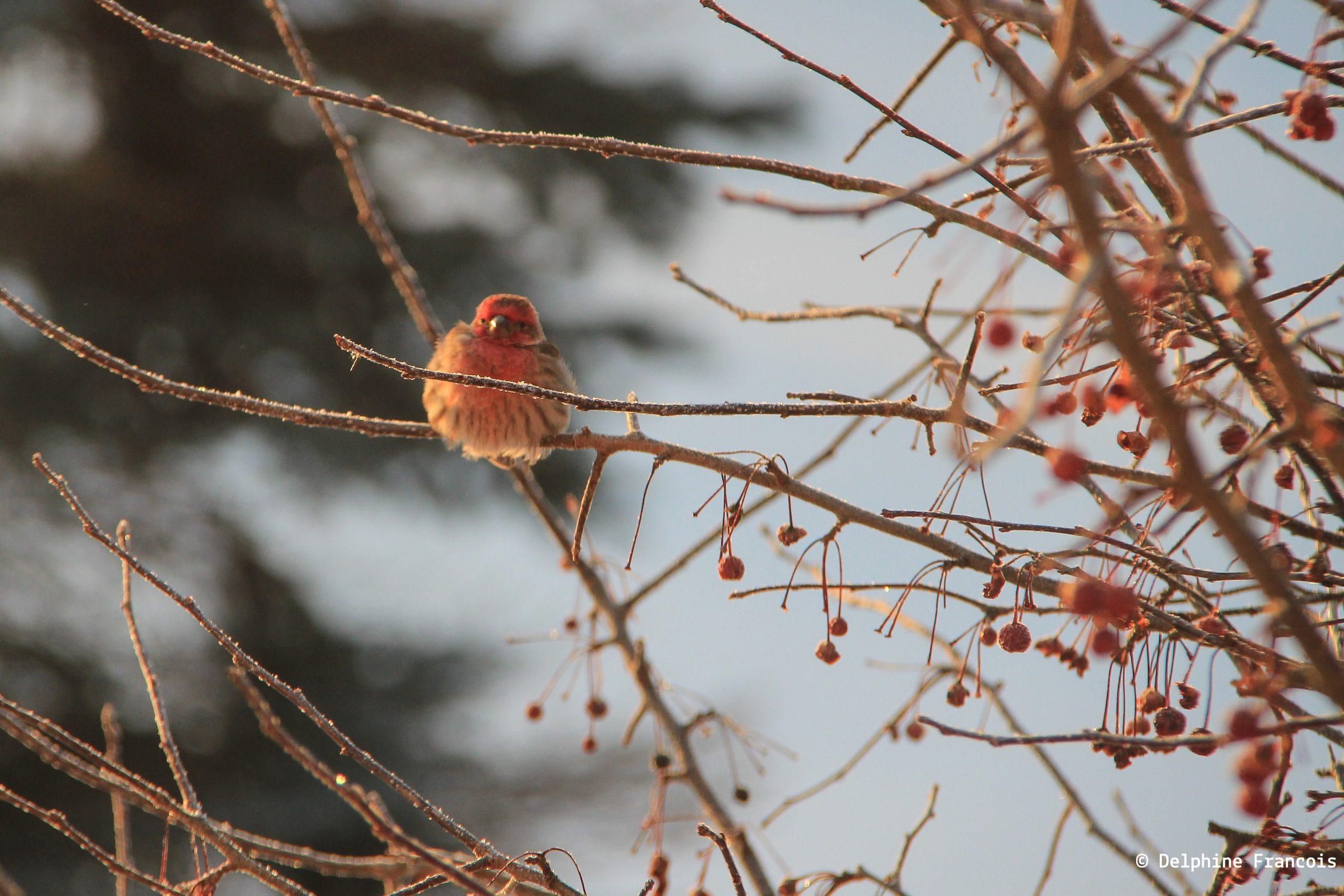 un oiseau lutte contre le grand froid cramponne a une branche